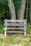 Bench in the Woods Royalty Free Stock Photography