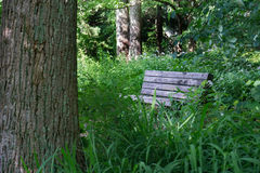 Bench in the Woods. A lonely bench located in a mountain garden Stock Photography