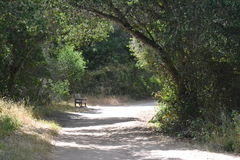 Bench in the woods. A bench sitting in the woods on a path Stock Image