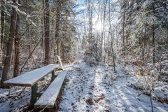 Bench in the woods. Stock Photo