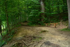 A bench in the woods. Wooden bench under a tree in the forest Stock Photos