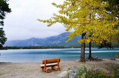 Bench and Yellow Leaves at side of Edith Lake, Canadian Rockies. Alberta, Canada royalty free stock photography