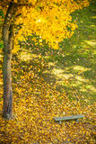 Bench and yellow maple leaves in park Stock Photography