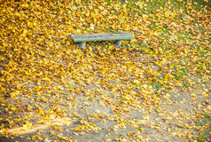 Bench and yellow maple leaves in park Stock Photo