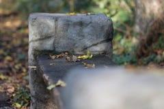 Benche в районе парка Стоковые Фото