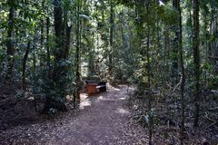 Benche del parco in foresta pluviale australiana fotografie stock