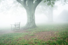 Benche och träd i dimma, bak Dickey Ridge Visitor Center i Sh arkivfoton