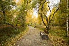 Benche sulla strada delle mattonelle in parco all'aperto immagini stock libere da diritti