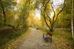 Benche sulla strada delle mattonelle in parco all'aperto immagine stock