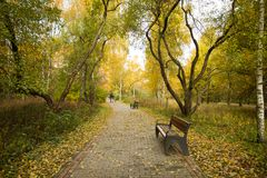 Benche On Tile Road In Park Outdoor. Golden Autumn Landscape. Wooden Benche On Path Tile Road In Autumn Public Park Outdoor Royalty Free Stock Images