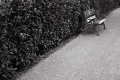 benches дорожки Стоковая Фотография