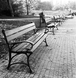 Benches. Stock Images