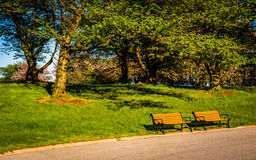 Benches along a path at Druid Hill Park, in Baltimore, Maryland. Royalty Free Stock Images
