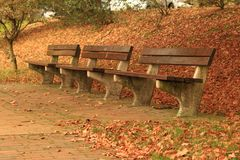 Benches in the park. Benches in the autumn park Stock Images