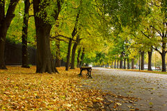 Benches in autumn park Stock Image