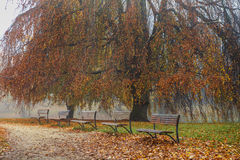 Benches in autumn park Royalty Free Stock Image