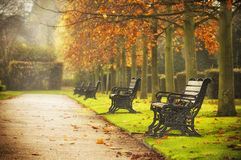 Benches in autumn park. Old fashioned benches in the park by foggy autumn morning, London Stock Photo