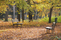 Benches in autumn park Stock Photography