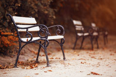 Benches in the autumn park Royalty Free Stock Photos