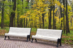Benches in autumn park Stock Photos