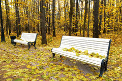 Benches in autumn park Stock Images