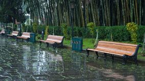 Benches in the Batumi Park on a rainy day.  royalty free stock image