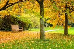Benches in a beautiful autumn park Royalty Free Stock Photography