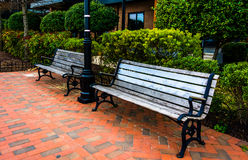Benches and bushes on the Waterfront Promenade in Fells Point, B Royalty Free Stock Photo