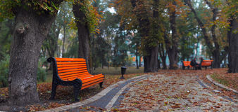 Benches in city park. In the autumn Stock Photos