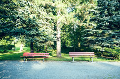 Benches in city park. Two benches in a city park in summer Royalty Free Stock Photos
