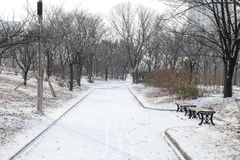 Empty snowy park on a cold day Royalty Free Stock Photo
