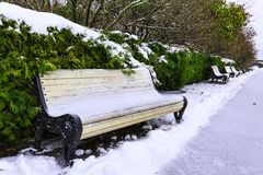 Benches and coniferous shrubs under snow along alley in city park on overcast winter day. Royalty Free Stock Photos