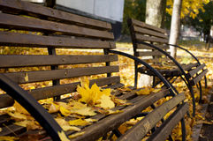 Benches covered with autumn leaves Stock Images