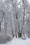 benches den frostiga ensamma parken Arkivbild