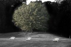 benches ensamt Arkivfoton