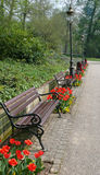 Benches and flower in park. Row of wooden benches and red flowers in park Stock Image