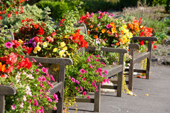 Benches and flowers. In a park in Uk Royalty Free Stock Photos