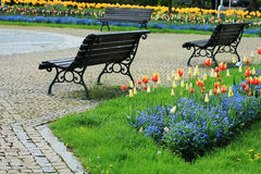 Benches in flowery park Royalty Free Stock Images