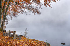 Benches on a foggy lake shore in autumn decor Stock Image