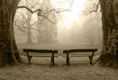 Benches in a foggy wood. Two benches in a foggy wood Royalty Free Stock Images