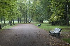 Benches in green park. Peacful autumn nature backgorund Royalty Free Stock Photos