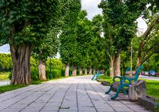 Benches on Kiev embankment in Uzhgorod. Lovely chestnut alley in summertime royalty free stock image