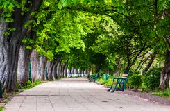 Benches on Kiev embankment in Uzhgorod. Lovely chestnut alley in summertime royalty free stock images