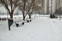 Benches on the Lane in Winter Royalty Free Stock Image