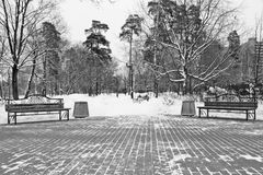 Benches and lanterns in winter black and white Royalty Free Stock Image