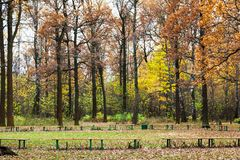 Benches on meadow in urban park in autumn. Benches on meadow in urban Timiryazevskiy park in Moscow city in autumn Stock Image