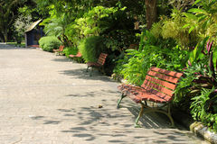 Benches in the Park. Image of wooden benches at botanic garden / park Stock Image