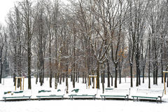 Benches in the park. A row of benches in the park on a snowy day Royalty Free Stock Photo