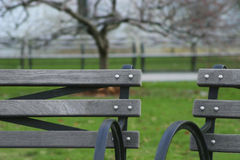Benches at the park. Photo of benches at the park Royalty Free Stock Photos