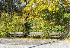 Benches in park at autumn Stock Photos